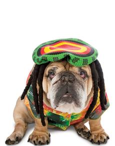 Déguisement Rasta chien