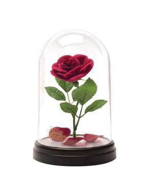 Trandafirul fermecat Frumoasa și Bestia în vitrină luminată