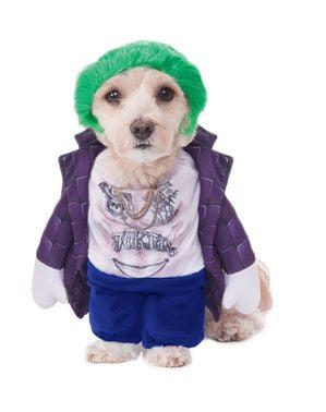 Joker kostume til hunde
