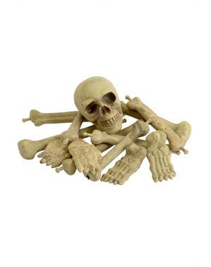 Zestaw luźne kości