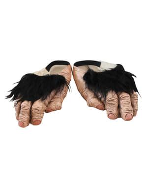 Schimpansen Füßen