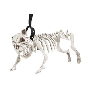 Squelette de chien avec laisse