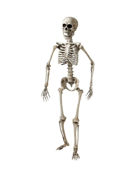 160cm Articulated Skeleton