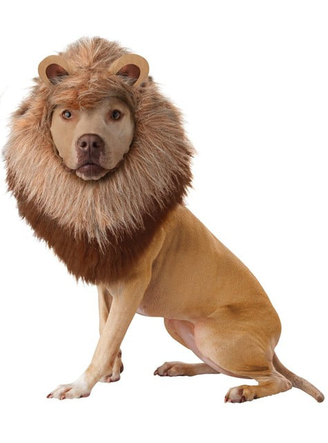Lion costume for a dog