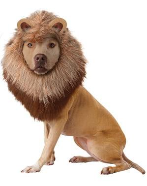 Leeuw kostuum voor honden