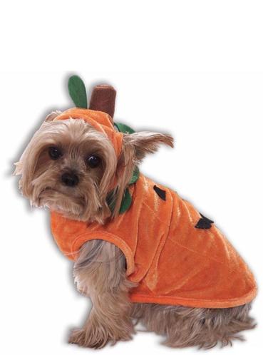 Kostuum pompoen voor honden. Volgende dag geleverd | Funidelia