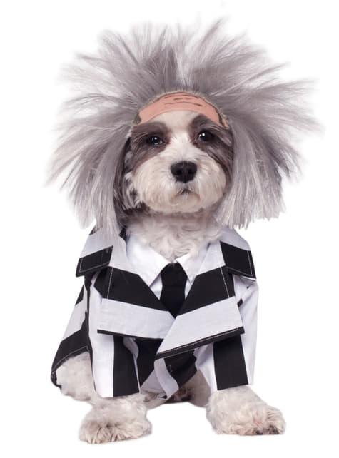 犬ビートルジュース衣装