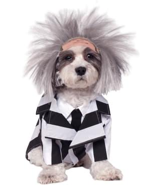 Disfraz de Beetlejuice para perro