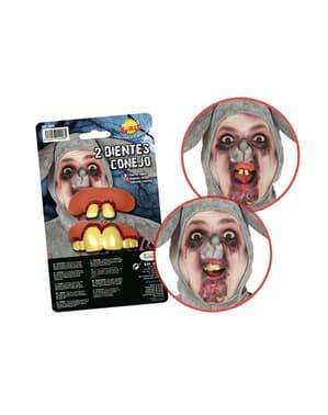 Kit di 2 denti da coniglio