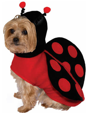 Kostým pro psa beruška