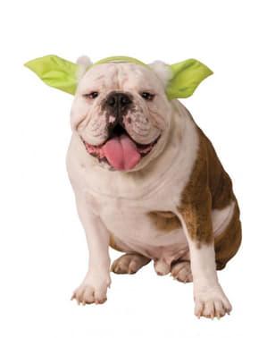 Orelhas de Yoda Star Wars para cão