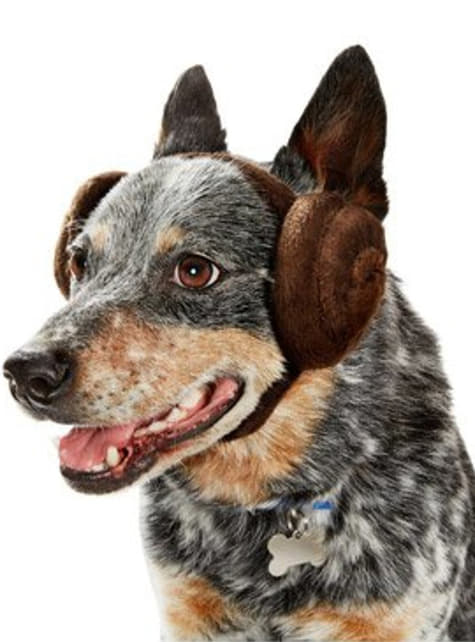 Dogs Princess Leia Star Wars ears