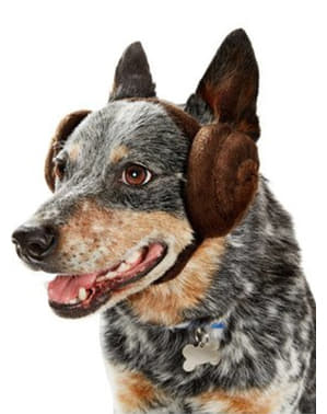 Urechi prințesa Leia Star Wars pentru cățel
