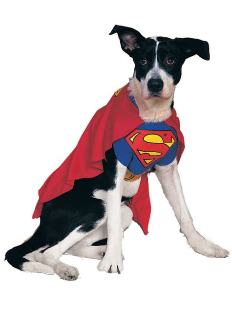 Dogs Superman costume