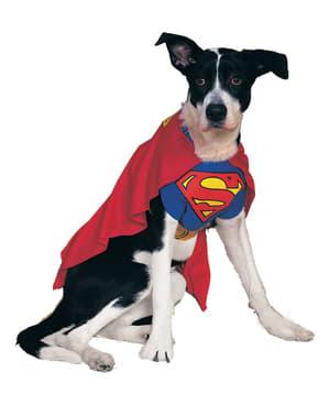 犬スーパーマン衣装