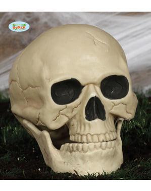 Tête de mort décorative (20 cm)
