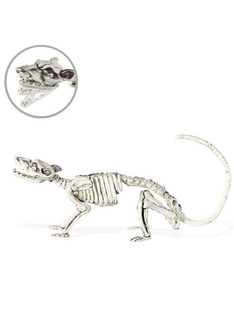 Szkielet szczura