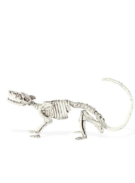 Squelette de rat