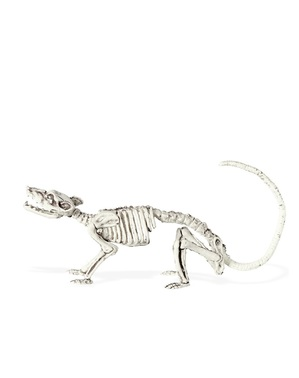 Esqueleto de rato