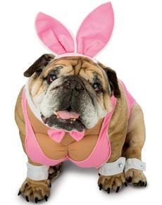 Disfraz de conejita playboy para perro