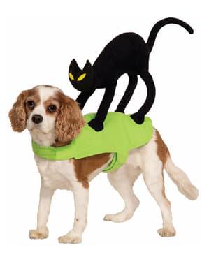 Kostum Anjing Kucing di Bagian Belakang