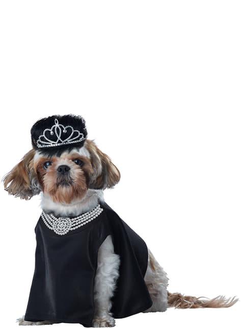 Fato de diva de Hollywood para cão