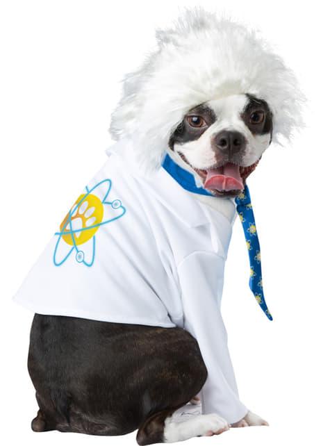 Disfraz de Alperro Einstein para perro - perro
