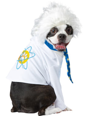 Disfraz de Einstein para perro