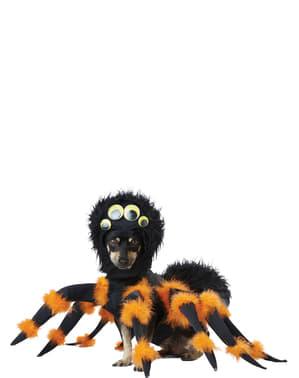 Fato de aranha assustadora para cão