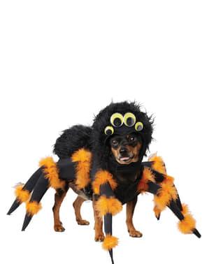 Kucing labah-labah menakutkan anjing