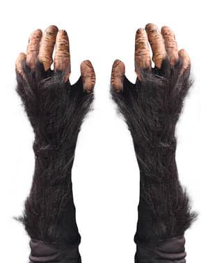 Ръцете на шимпанзетата на възрастни