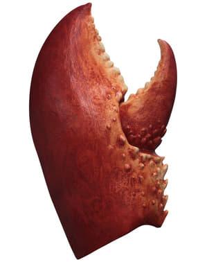 Szczypiec raka dla dorosłego