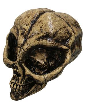 Crâne décoratif squelette alien