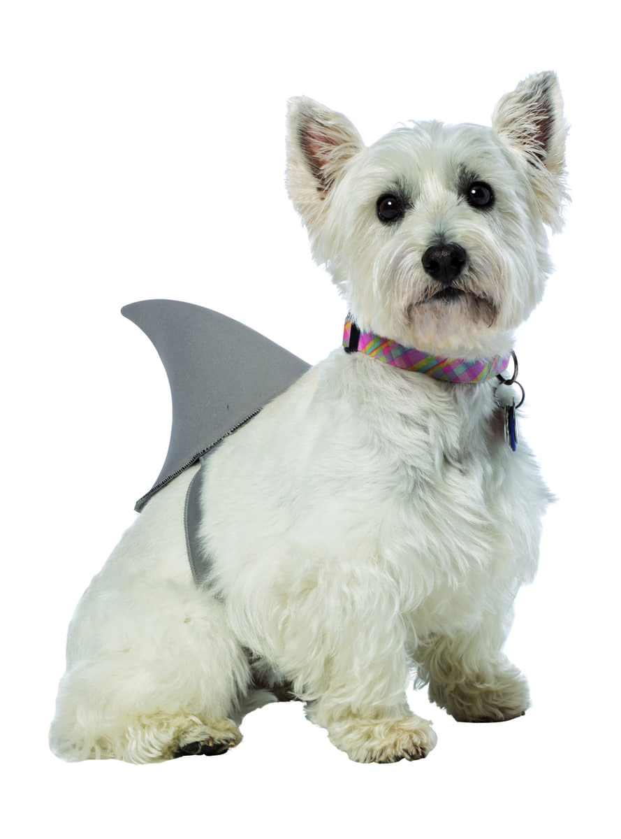 Large Dog Shark Fin