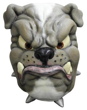 Bulldog Latex-Maske für Erwachsene
