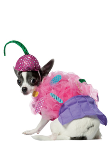 huge discount a015e 48e51 Cupcake dräkt till hund