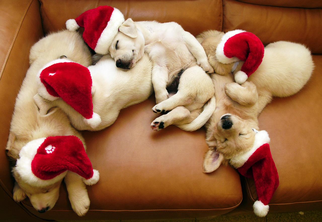 animales navideños