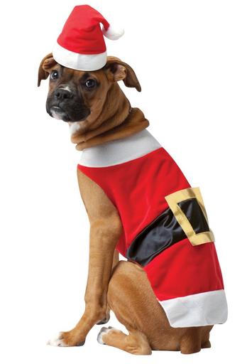 disfraz papa noel perro