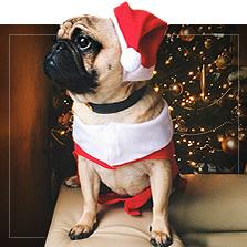 Weihnachtskostüme für Hunde