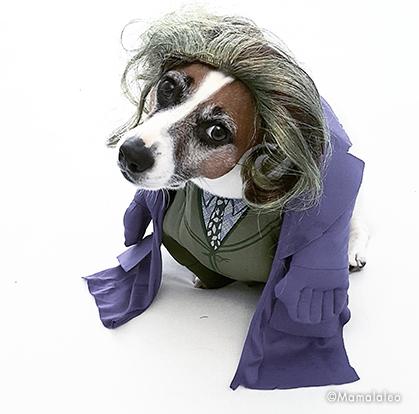 😺 Vestiti cani. Costumi per gatti e animali domestici  6d45173435aa