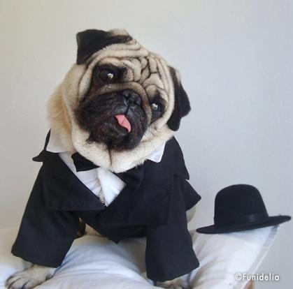 2bcbe0f6c031 Un costume elegante per cani eleganti! Ideale per ilo Cenone